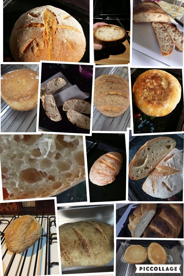 Workshop 3 - First breads