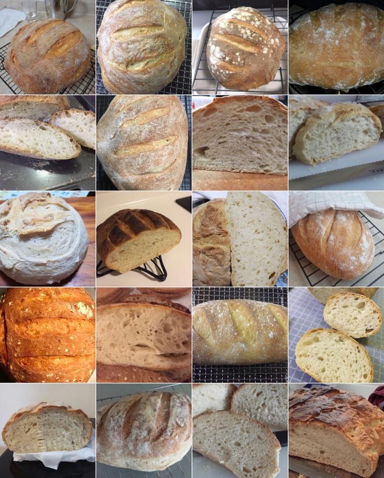 Sourdough WS16 Breads